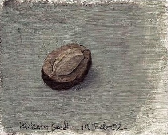 hickory seed